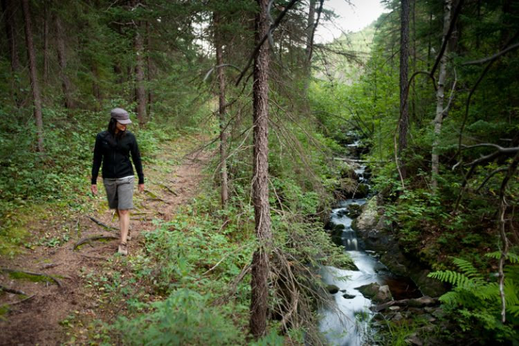 Sentier et ruisseau
