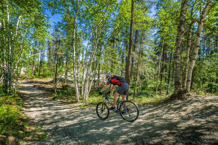 Vélo De Montagne Forêt Récréative 0251