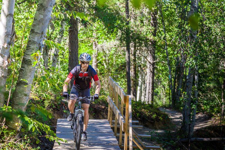 Vélo De Montagne Forêt Récréative 0449