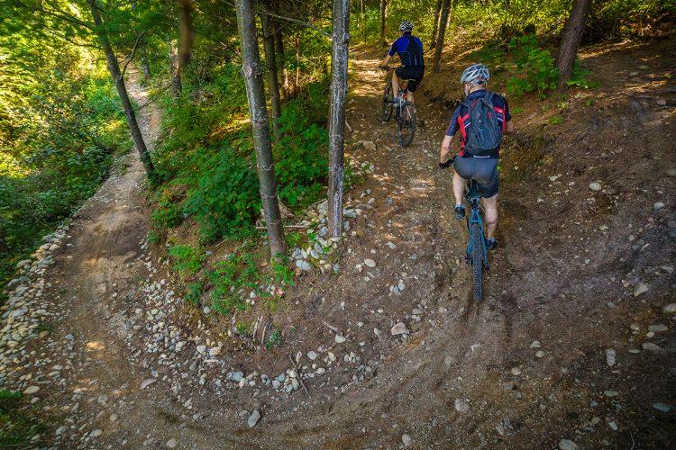 Vélo De Montagne Forêt Récréative 0643