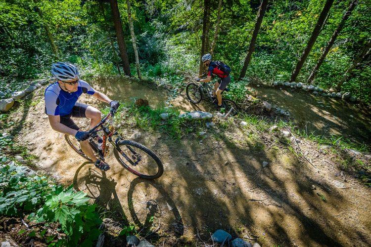 Vélo De Montagne Forêt Récréative 0952